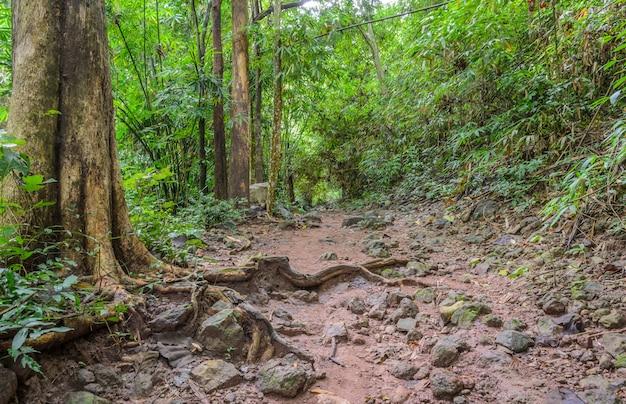 Pista de caminhada pela floresta
