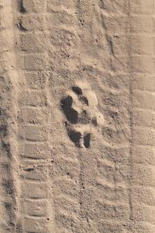Pista de lobo na areia na estrada da areia, foto close-up