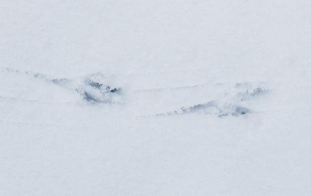 Pistas de corvo na neve branca. vestígios de pássaros
