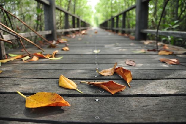 Placa de madeira a pé na floresta de mangue