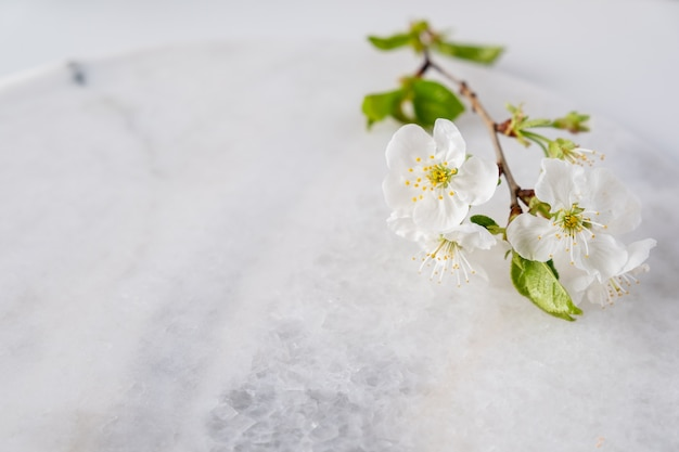Placa de mármore vazia para exposição do produto com flores de cerejeira. spa e cuidados com o corpo