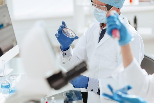 Placa de petri nas mãos de um microbiologista