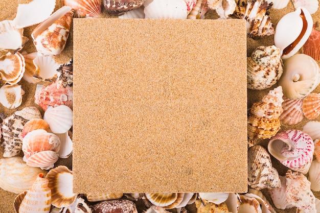 Placa de pinos em conchas