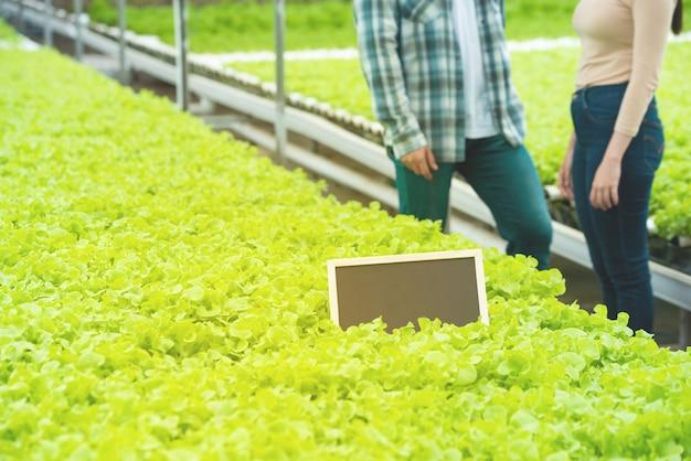 Placa preta pequena vazia no vegetal verde na fazenda orgânica hipogênica com parte do homem asiático e mulher em pé ao lado da fazenda de alface verde no fundo