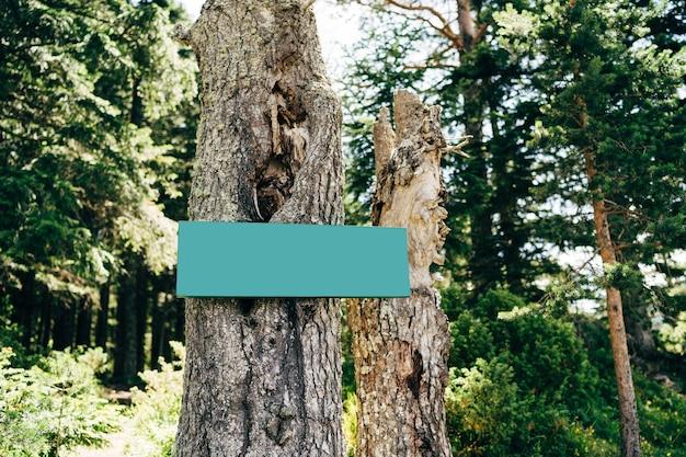 Placa verde em branco em uma árvore no meio da floresta