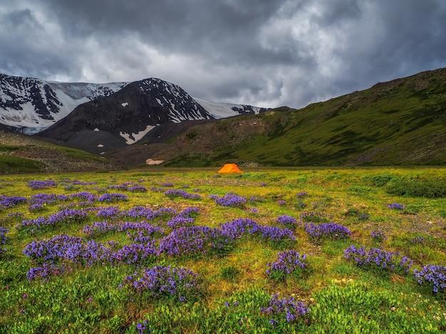 Planalto de flores da montanha dramática com arbustos de flores roxas e uma tenda laranja ao longe, perto da geleira.