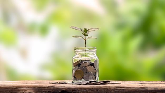 Planejamento financeiro e ideias de aposentadoria plantar uma árvore de garrafa para economizar dinheiro em uma mesa de madeira e fundo verde natural desfocado