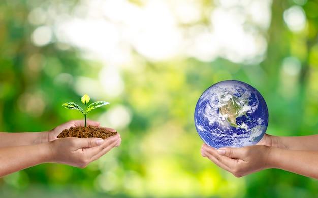 Planeta na mão humana com uma pequena árvore na mão humana no fundo borrado da natureza verde