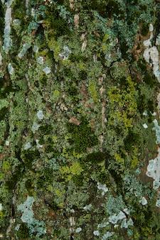 Plano de fundo - casca rachada de uma velha árvore coberta com musgo verde-claro