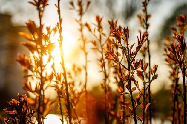 Plano de fundo da planta em um pôr do sol dourado.