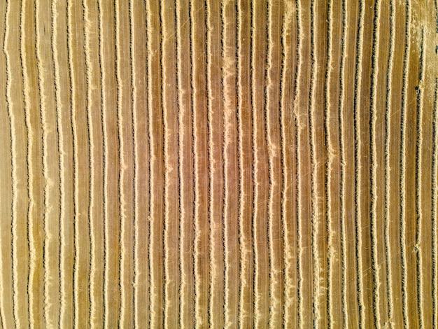 Plano de fundo da vista aérea de campos de cereais após a colheita.