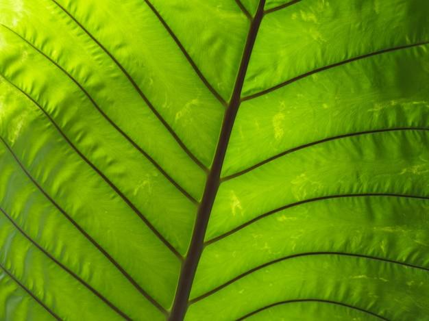 Plano de fundo de close-up de macro textura de folha verde