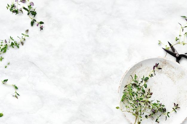 Plano de fundo de dieta saudável com borda de folha de tomilho