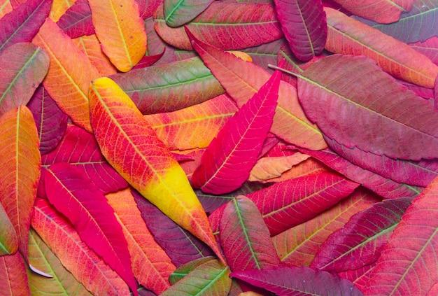 Plano de fundo de folhas de outono brilhantes vista superior close-up