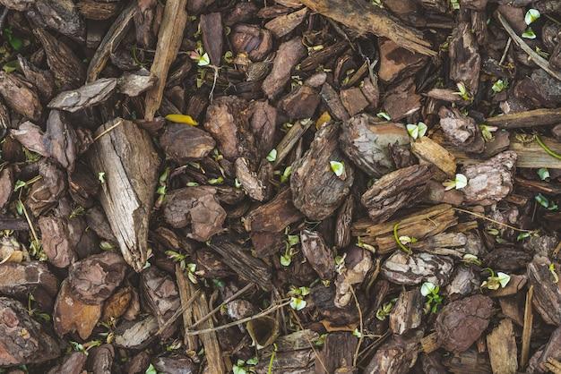 Plano de fundo de pequenos brotos verdes crescendo em um piso coberto por palha de casca de pinheiro natural