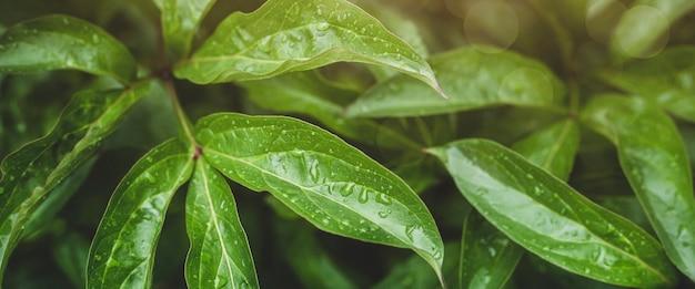 Plano de fundo de plantas florestais e flores após a chuva.