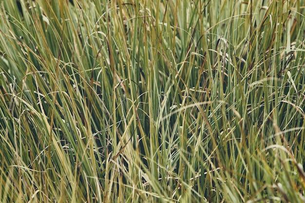 Plano de fundo de um campo gramado verde