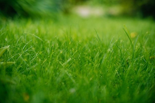 Plano de fundo de uma grama verde. textura de grama verde