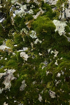 Plano de fundo e textura musgo cresce na pedra de mármore