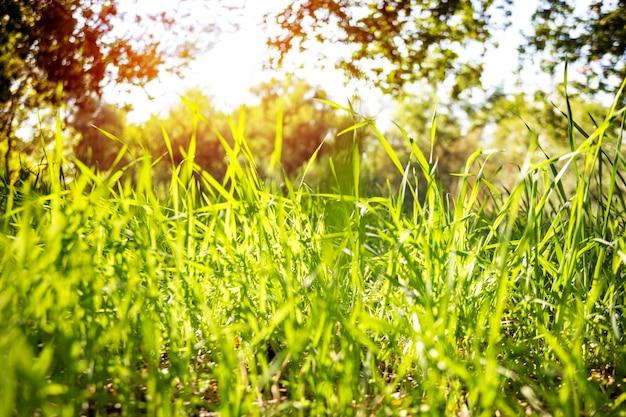 Plano de fundo - grama verde e céu azul, verão