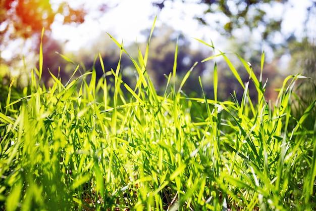 Plano de fundo - grama verde e céu azul