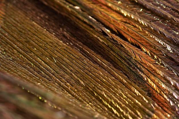 Plano de fundo orgânico de penas brilhantes de close-up
