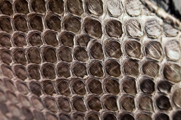 Plano de fundo, textura de uma pele de cobra close-up