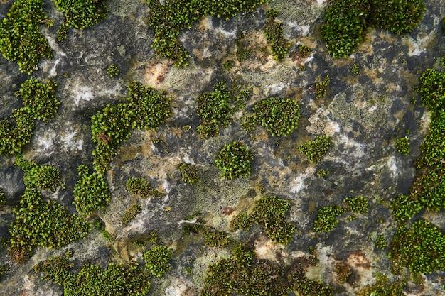 Plano de fundo, textura - manchas de musgo verde em uma superfície de rocha natural