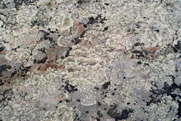 Plano de fundo, textura - superfície áspera de uma rocha coberta com vários tipos de líquenes