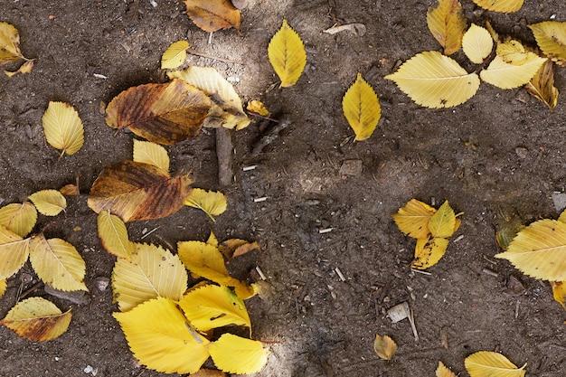 Plano de fundo transparente com texturas coloridas de folhas de outono