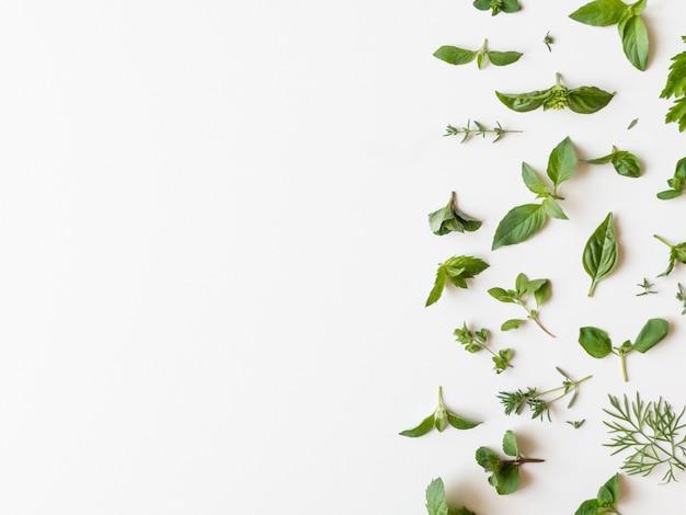 Plano de várias ervas verdes frescas de cozinha