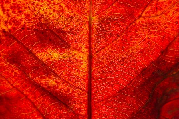 Plano plano, close-up de folha de outono