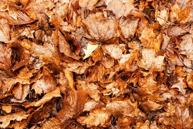 Planos de fundo e texturas. fundo de folhas de outono secas amarelas. tempo de outono.