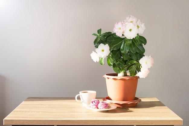 Planta adenium em uma panela e xícara de café com doces em uma mesa com luz do sol