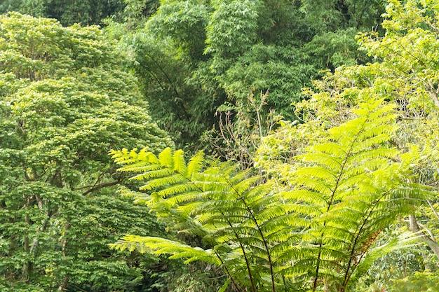 Planta asiática localizada em bandung, na indonésia