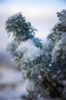 Planta branca e verde em close-up Foto gratuita