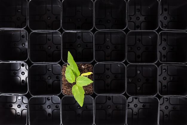 Planta brotando em solo marrom