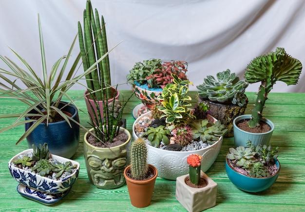 Planta cobra, sansevieria, dracaena, terrário, suculentas na mesa verde