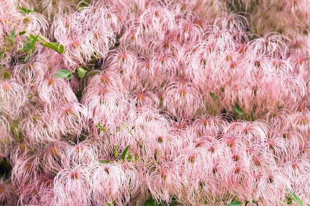 Planta com flor rosa no outono parque da cidade (superfície natural)
