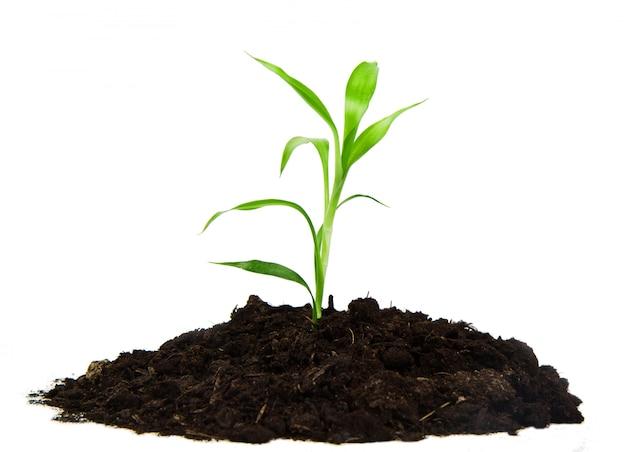 Planta com folhas verdes e terra