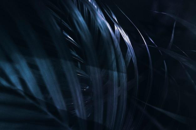 Planta com fundo azul escuro estampado