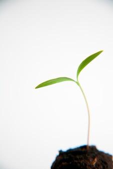 Planta, contra, fundo branco