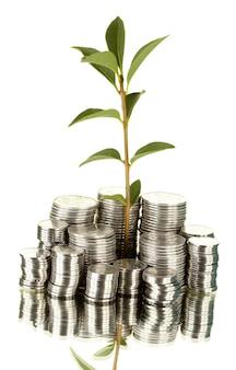 Planta crescendo a partir de moedas de prata isoladas em close-up de fundo branco