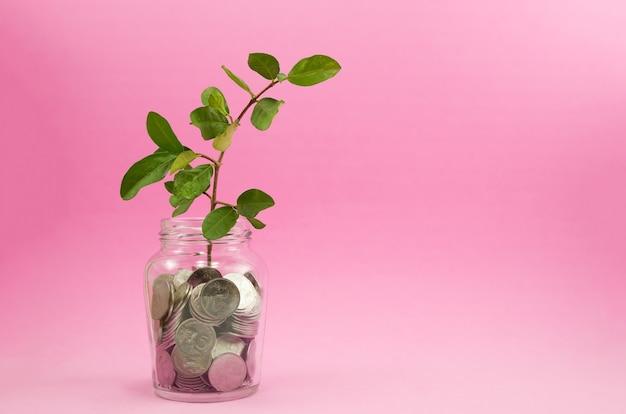 Planta crescendo em moedas de poupança com fundo rosa claro - investimento e conceito de juros