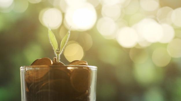 Planta crescendo em moedas de poupança