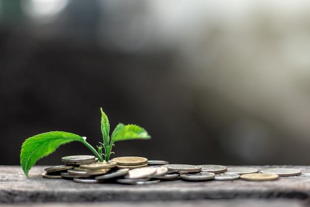 Planta, crescendo, ligado, moedas, dinheiro