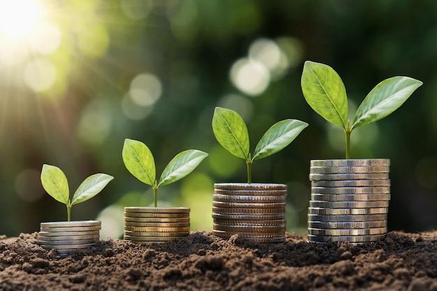 Planta crescendo passo em moedas. conceito de finanças e contabilidade
