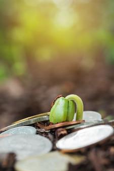 Planta crescente em moedas de dinheiro - conceito de investimento