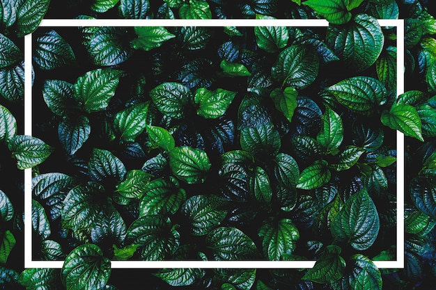 Planta da vista superior e quadro de papel. planta e frame verdes da folha com espaço da cópia.