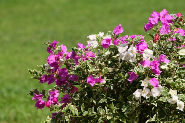 Planta de arbusto com flores